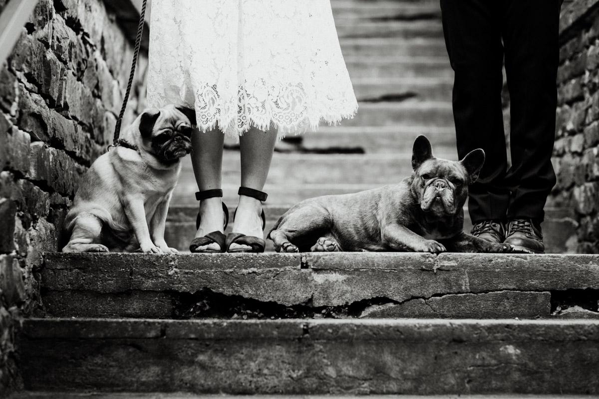 Zwei Hunde liegen zwischen Paar auf Boden